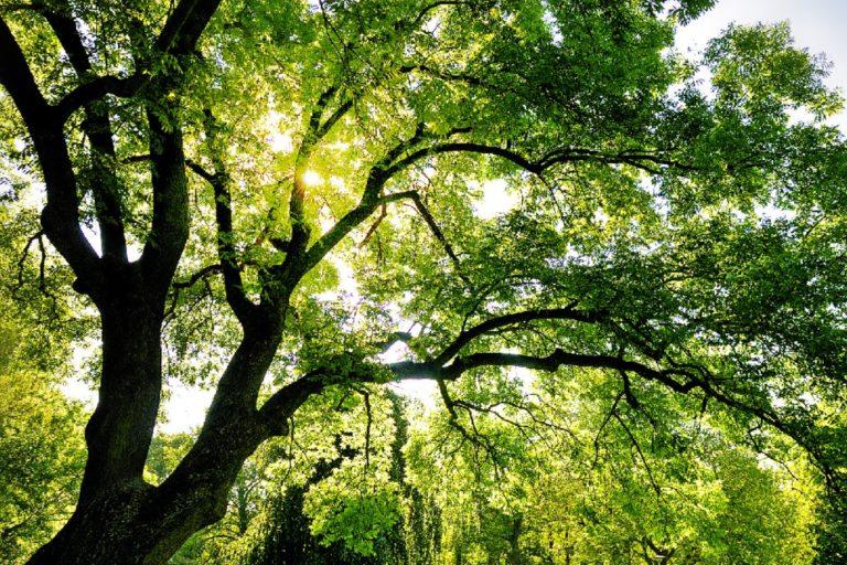 Carpi. L'ambiente al centro dell'attenzione del M5S: venerdì 15 e domenica 17 marzo si parla di verde pubblico, pianificazione sostenibile delle città e raccolta differenziata intelligente 1